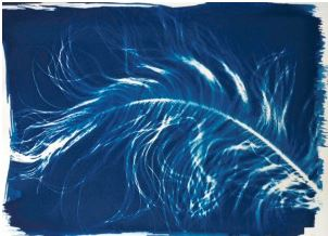 Cyanotype exemple